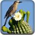 仙人掌与鸟拼图