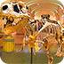 逃离恐龙博物馆