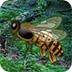 逃离大黄蜂森林