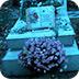 逃离拉雪兹神父公墓