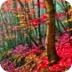 红树林的隐藏目标